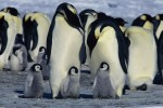 a.March-of-the-Penguins