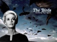 The-Birds-alfred-hitchcock-2422003-1024-768